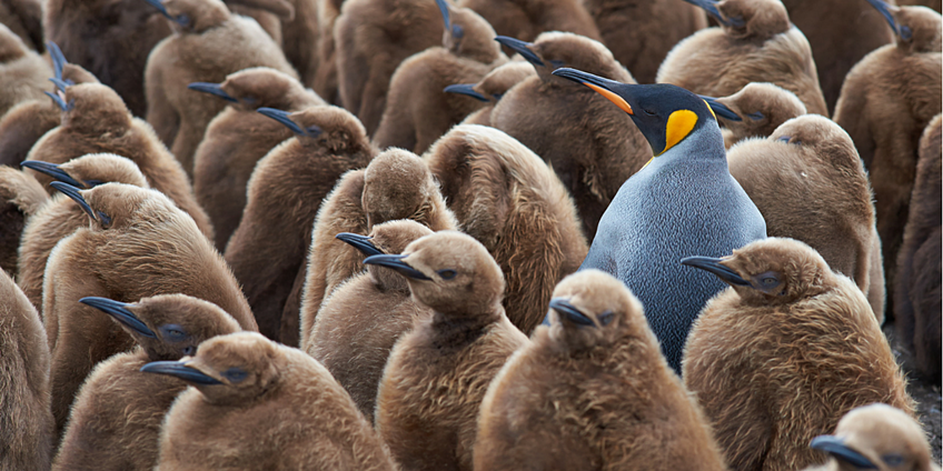 Stand out from the crowd with employer branding - Talent Attraction - Social Recruiting